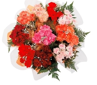 Dozen Carnation Bouquet Product Image