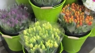 Assorted Tulips Product Image