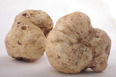 Fresh Italian White Truffles  (Seasonal - Pre-order )  Product Image